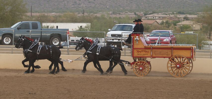 Show-Percheron Wagon.jpg (64134 bytes)